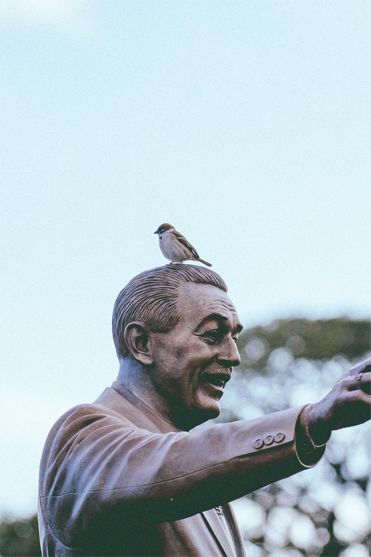 Feed the birds, Walt.