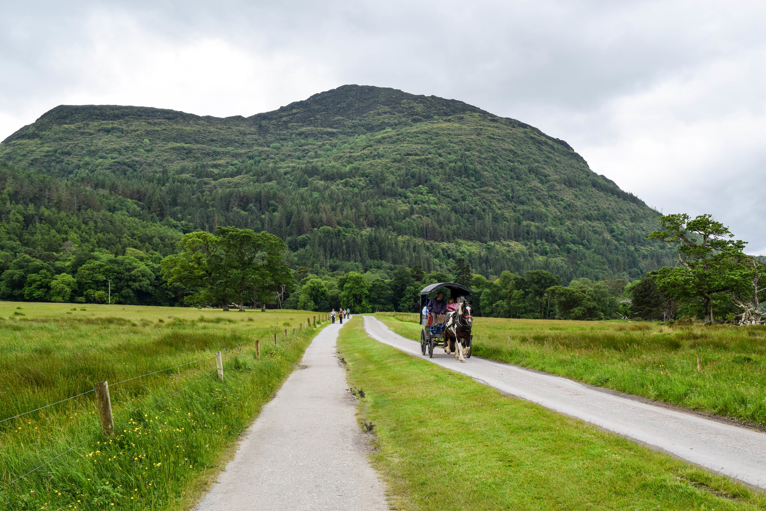 The Macgillycuddy Reeks (the mountains of Killarney National Park) do not reek. The horse manure, however, did.