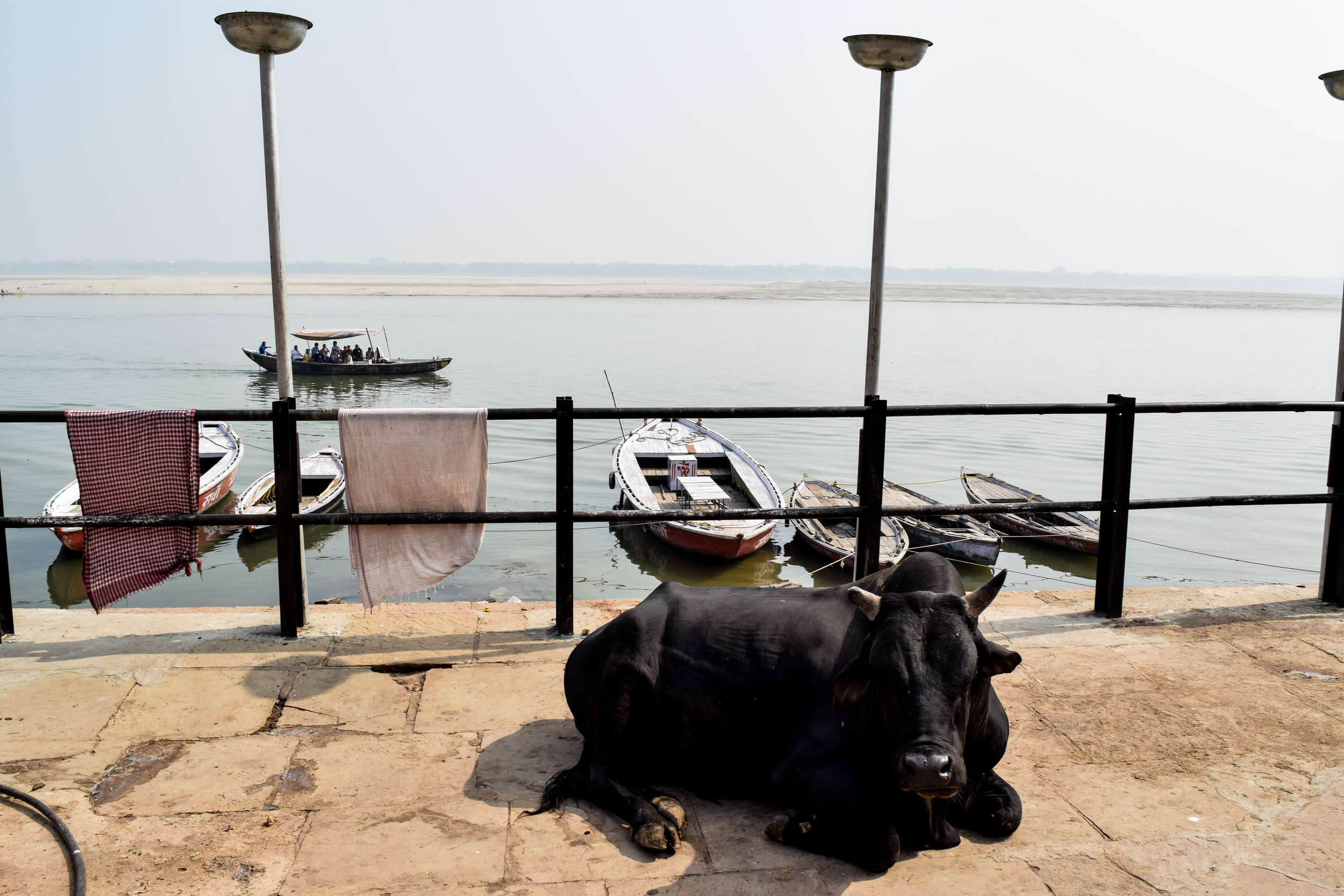 Above: a cow who is chiller than I am on the ghats.