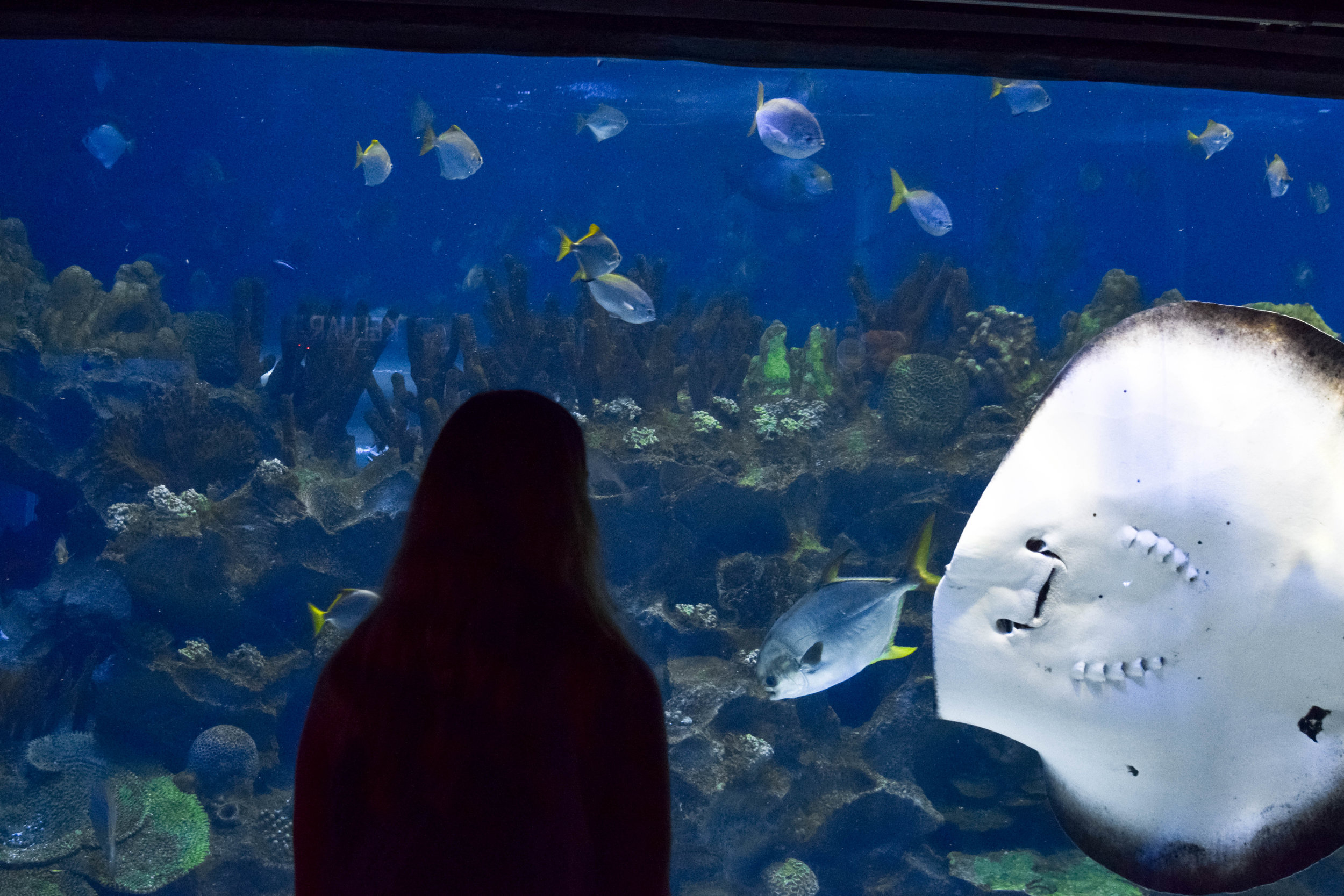 Making new friends at Aquaria KLCC.