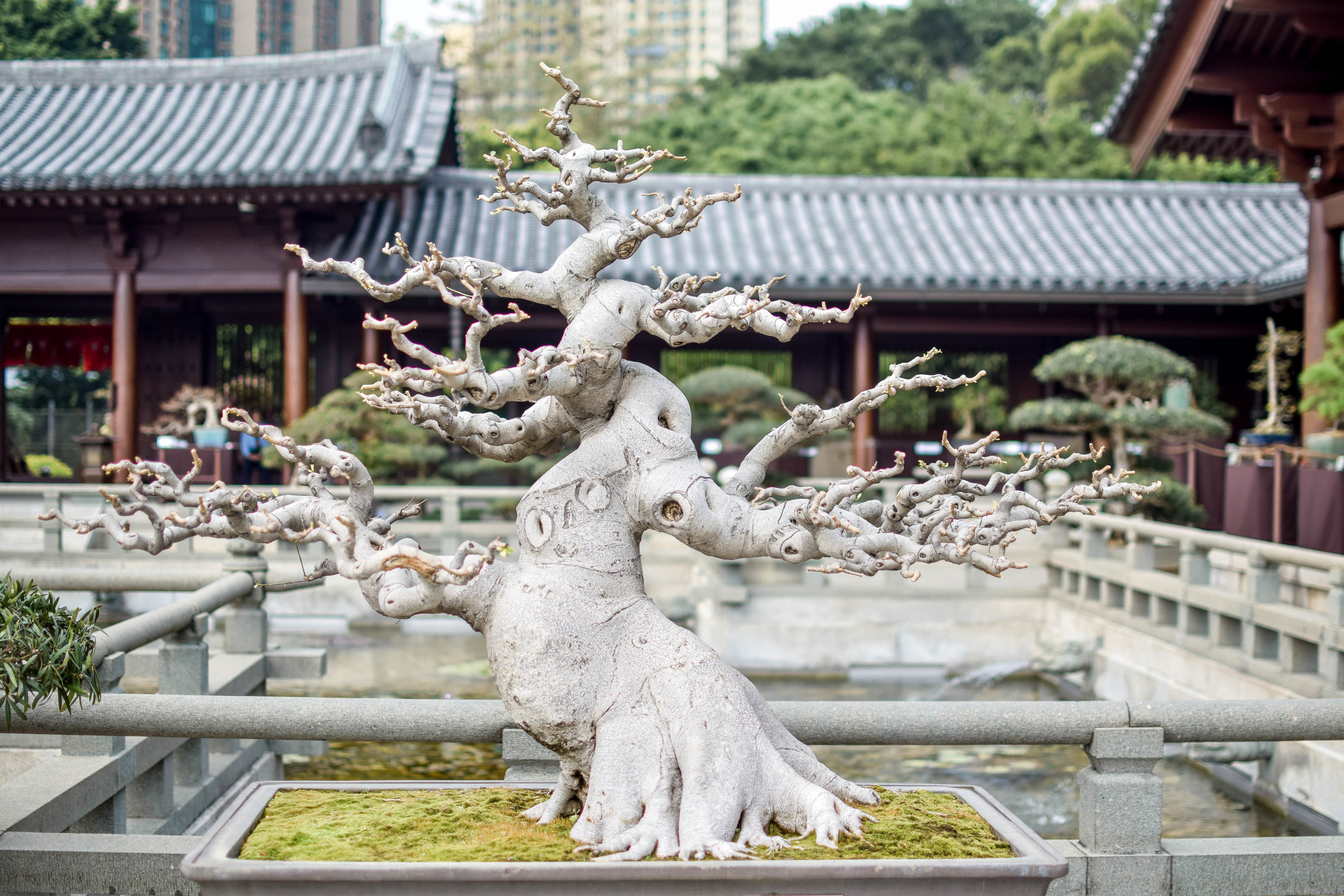 A great place to burn off some calories is the Chi Lin Nunnery's huge zen garden.