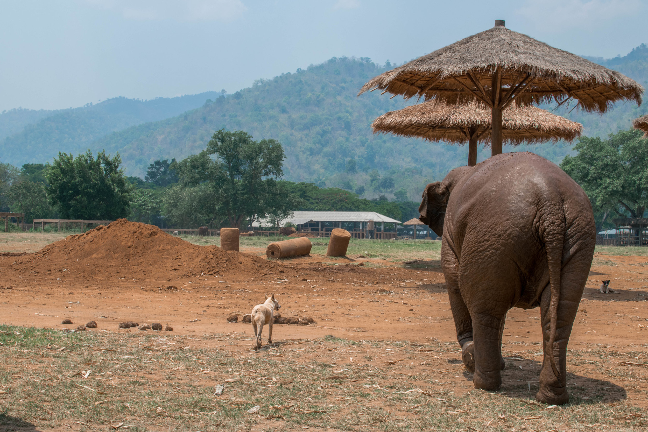 The two best friends that anyone could have. In addition to the gentle giants it's named for, ENP is also home to dozens of rescue dogs, cats, water buffalo, and other critters rescued from desperate situations.