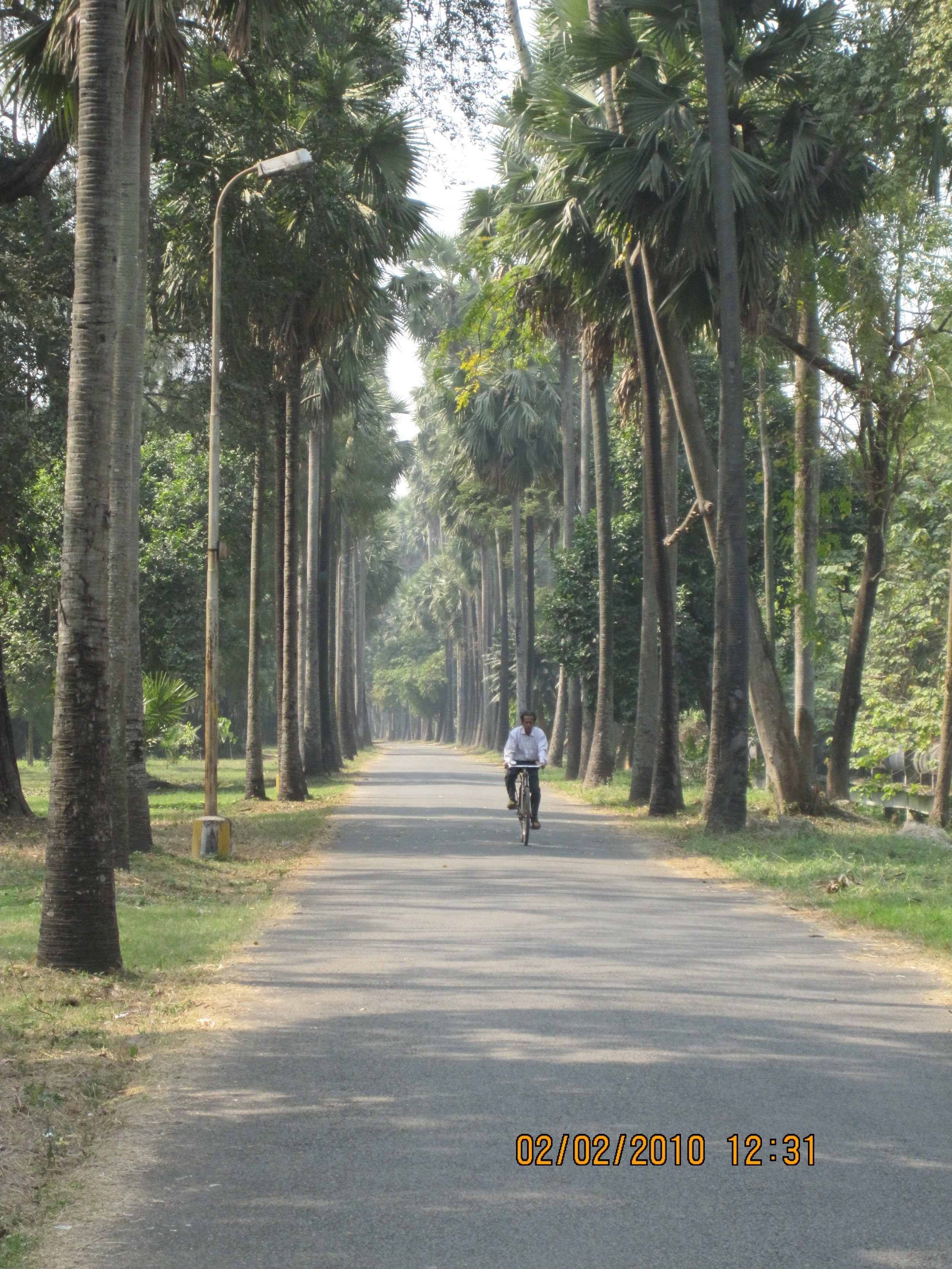 Picture taken by sipra at the  Acharya Jagadish Chandra Bose Indian Botanic Garden .