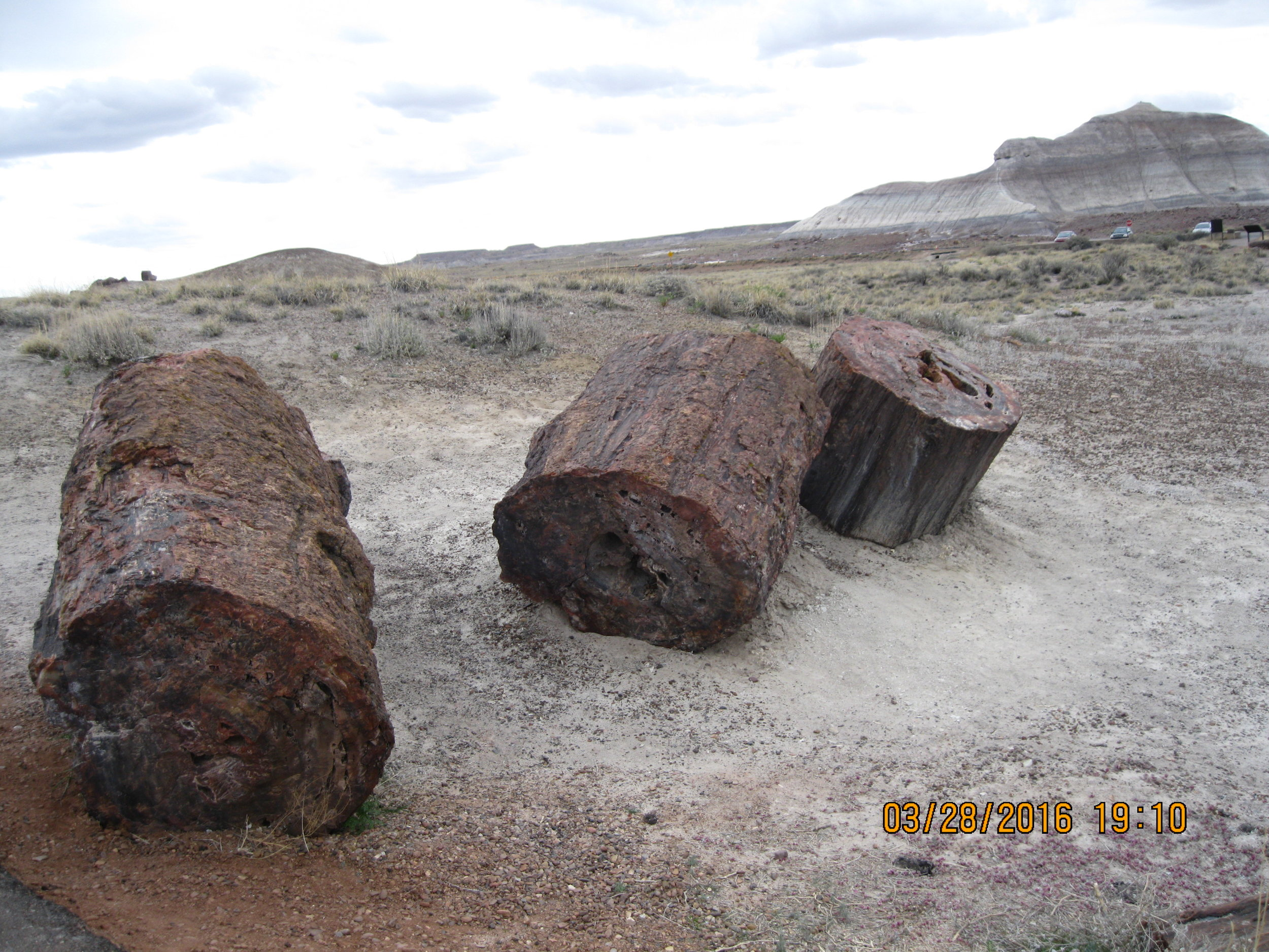 Petrified wood from sipra's trip to the Southwest. Petrified Forest National Park