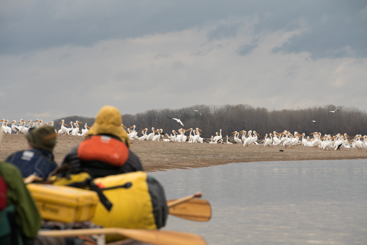Lena (left) and Mark River (right) as we carefully approach hundreds of pelicans.