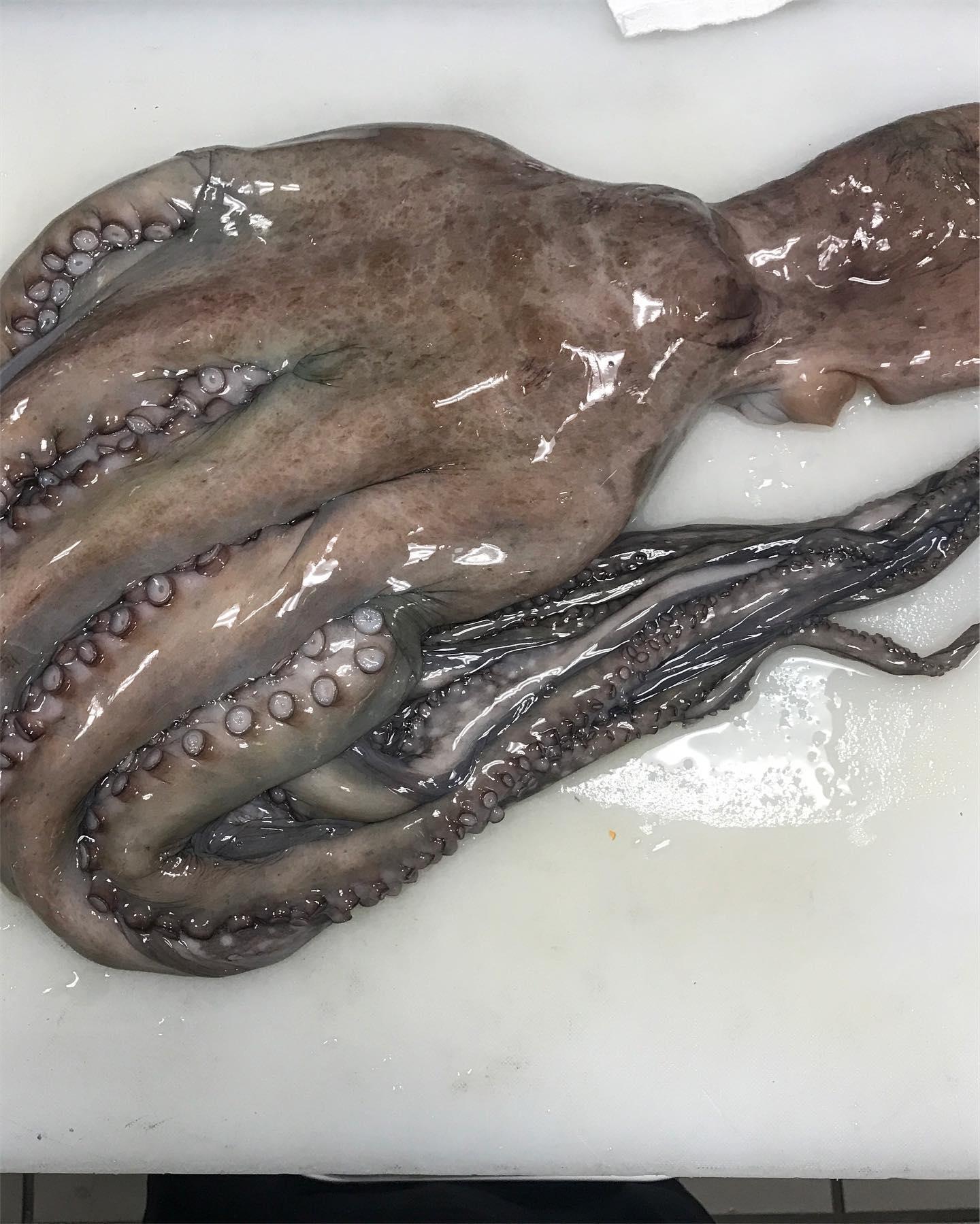 080919 Octopus.jpg