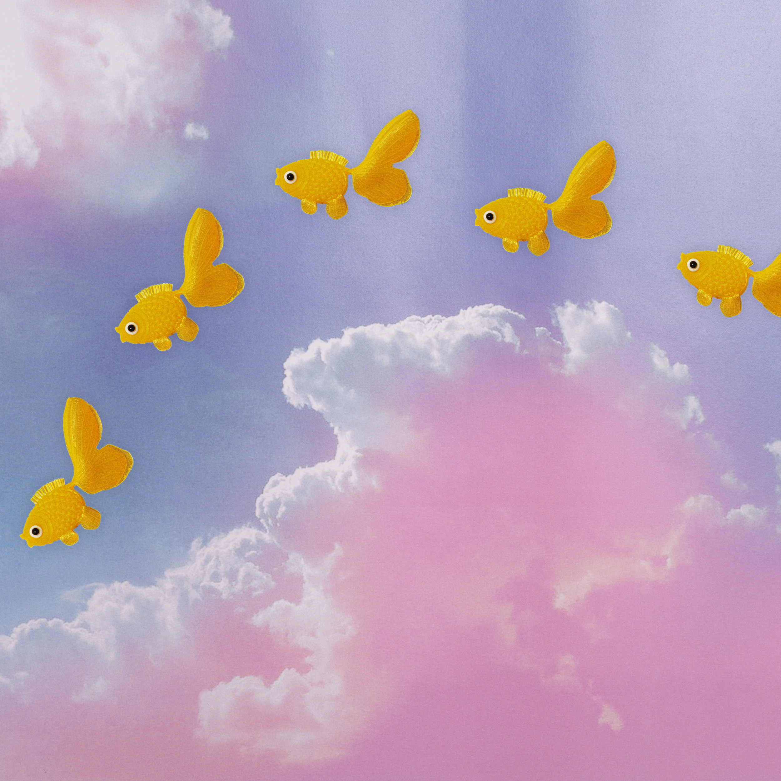 April 21st - World Fish Migration Day