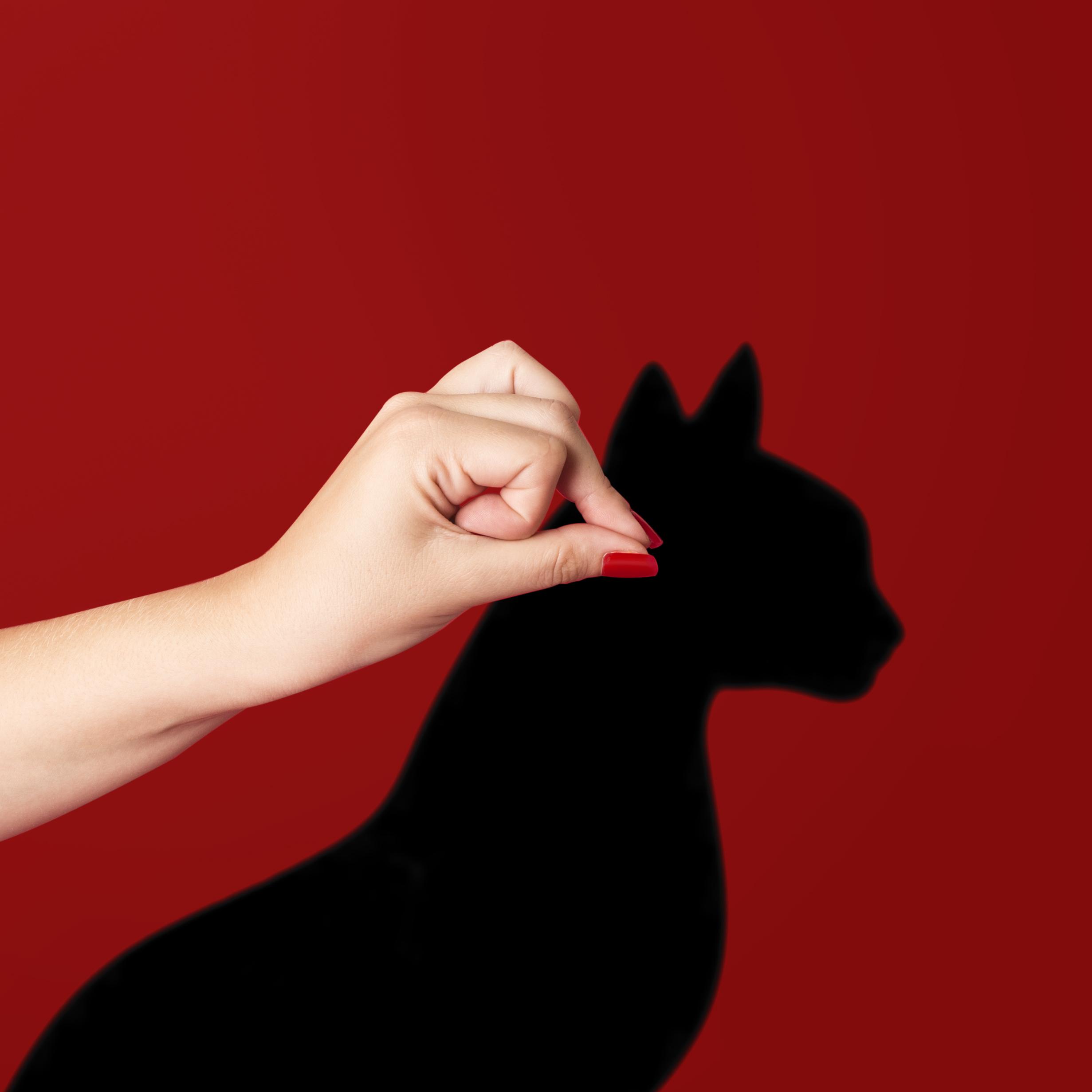 August 17th - Black Cat Appreciation Day