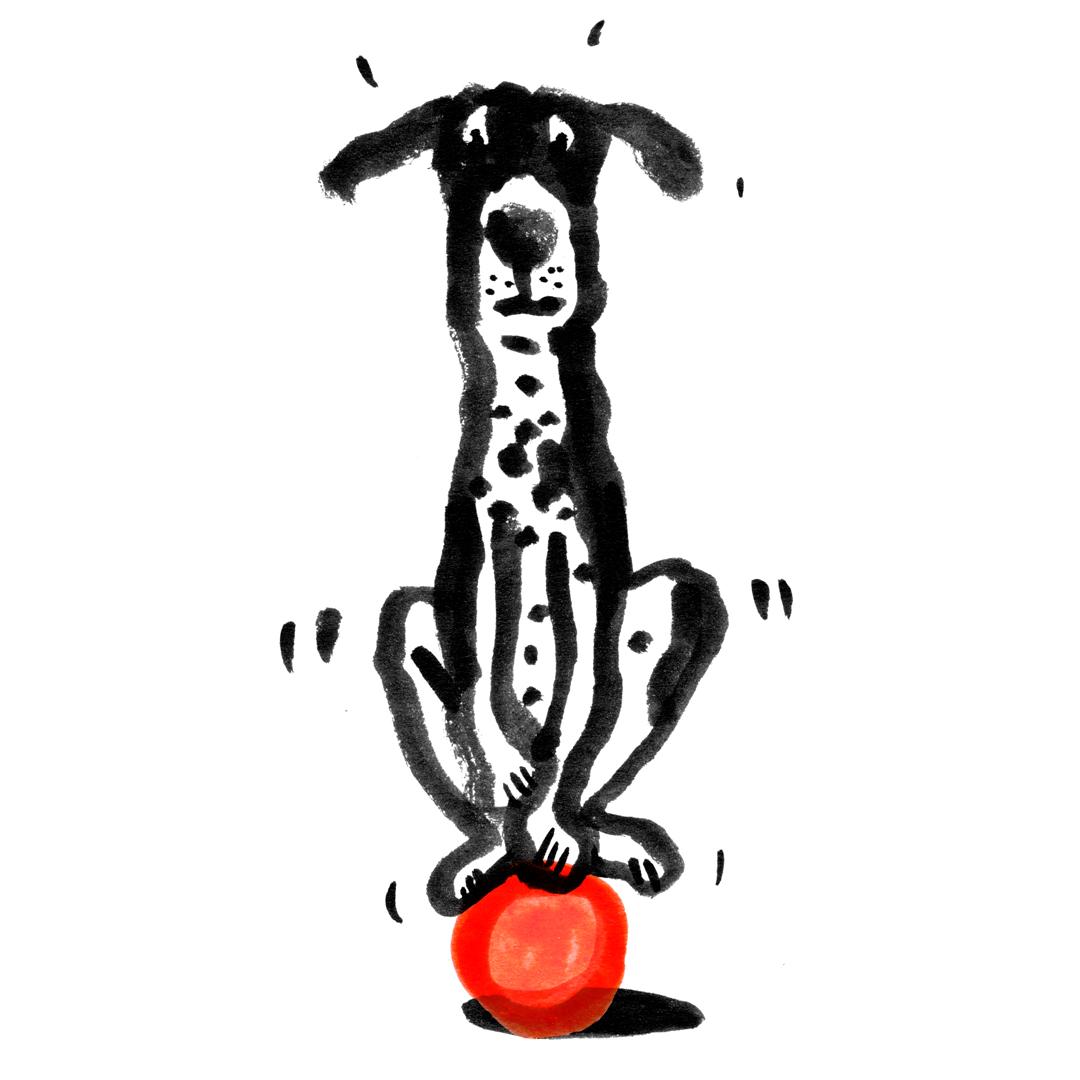 dog-3.jpg