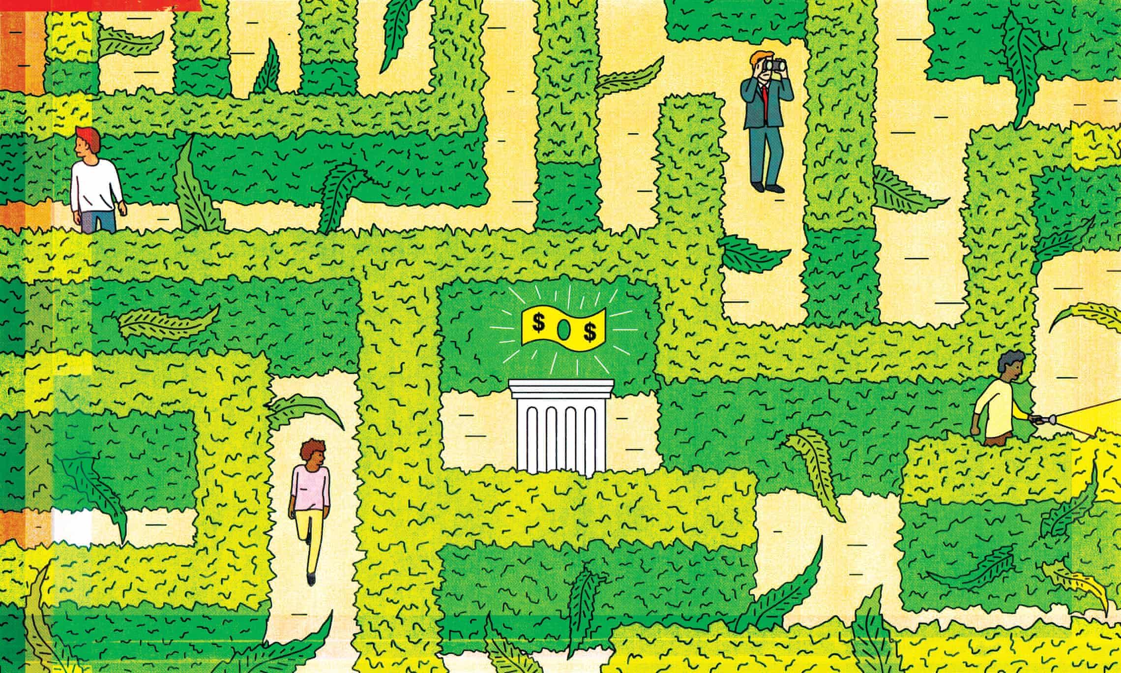 Cannabis maze.jpg