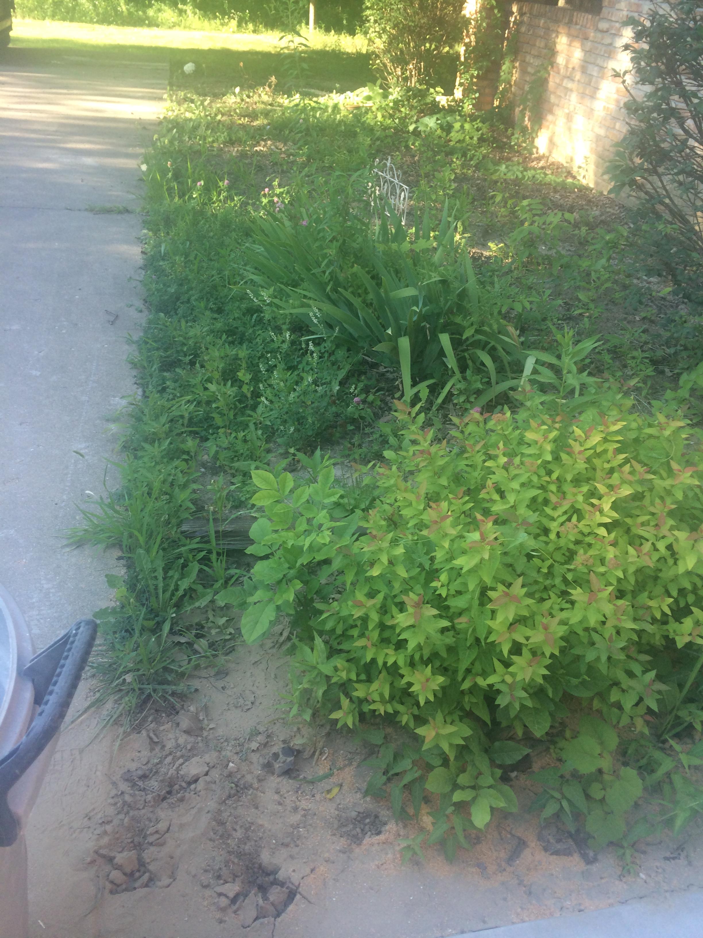 so many weeds!