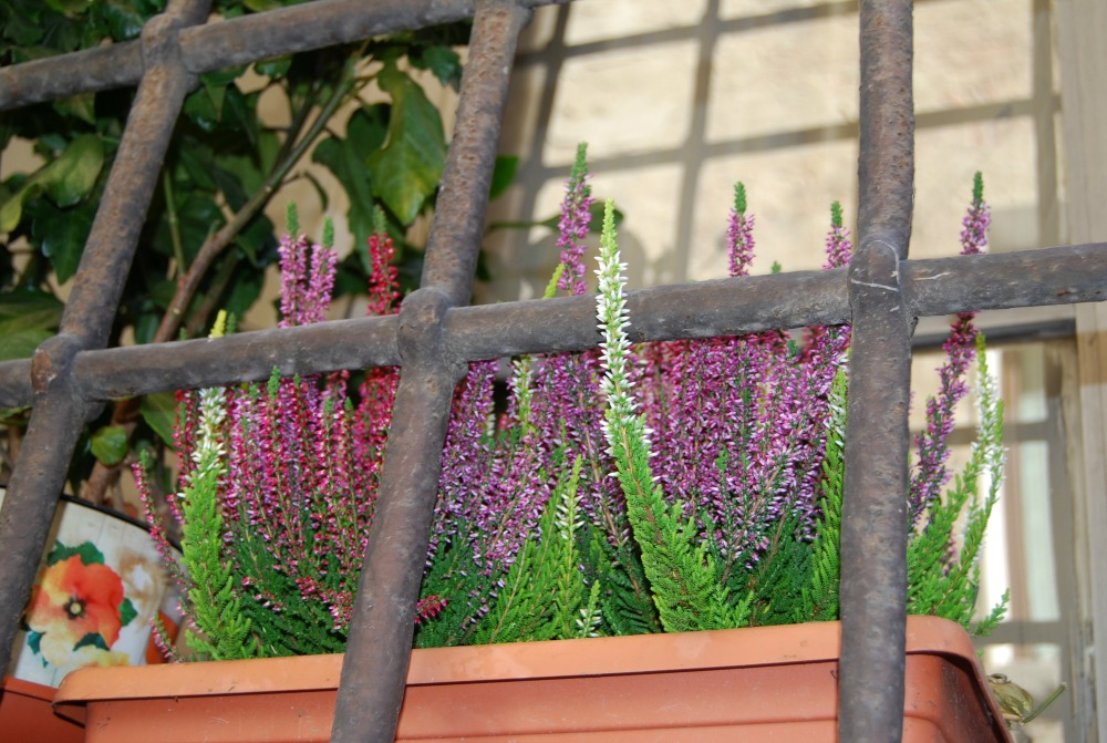 - Pretty little flowers behind massive bars