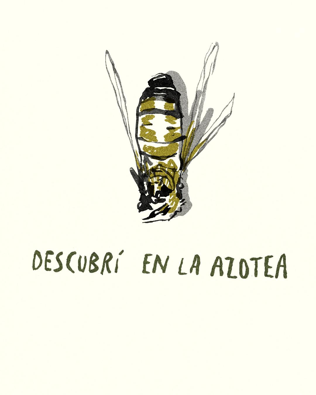 para las abejas 16.jpg