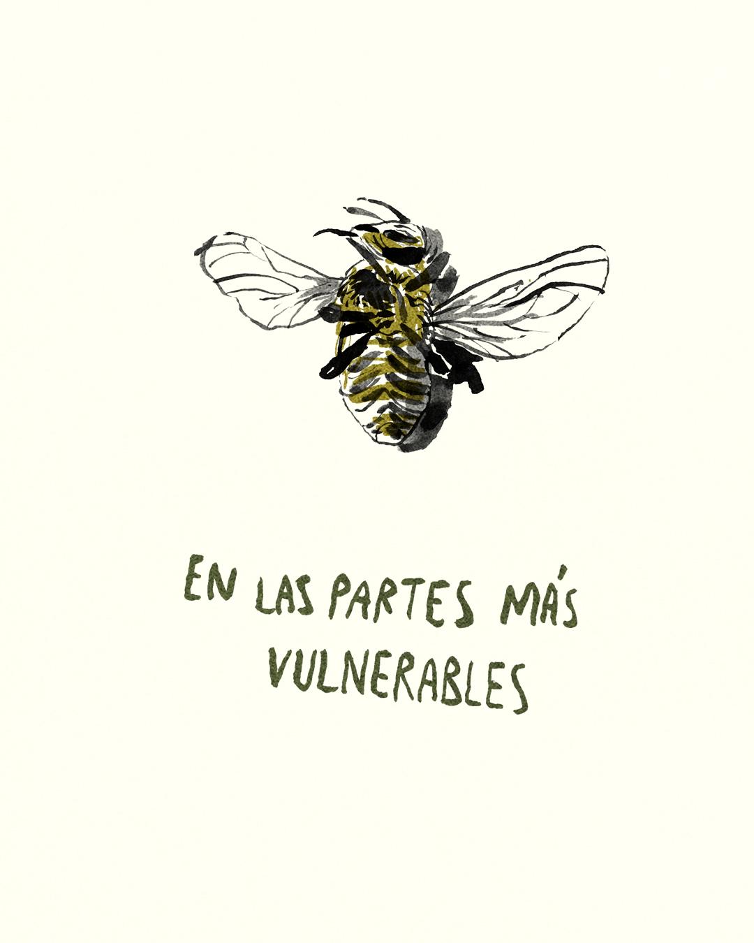 para las abejas 25.jpg