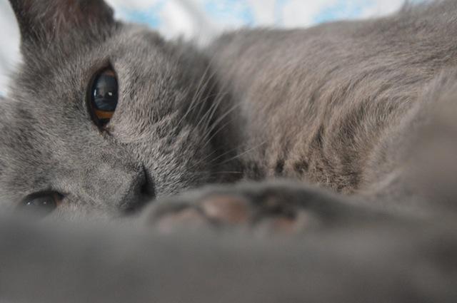 tired_cat_birchbark_foundation