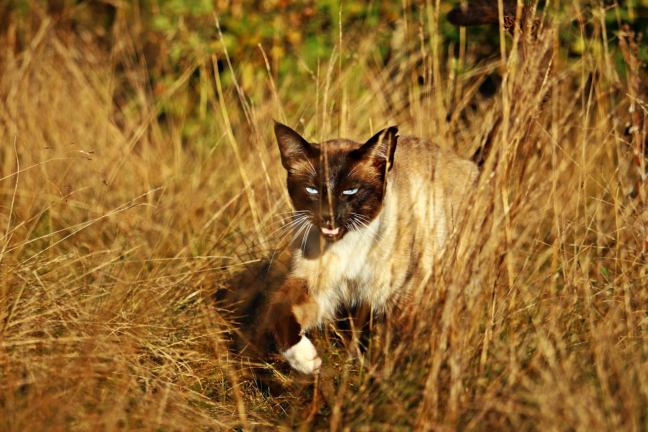 cat-1722746_1280.jpg