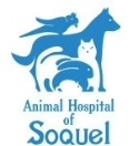 animal hospital of soquel.jpg