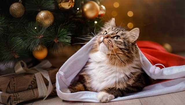 inset_cat.jpg