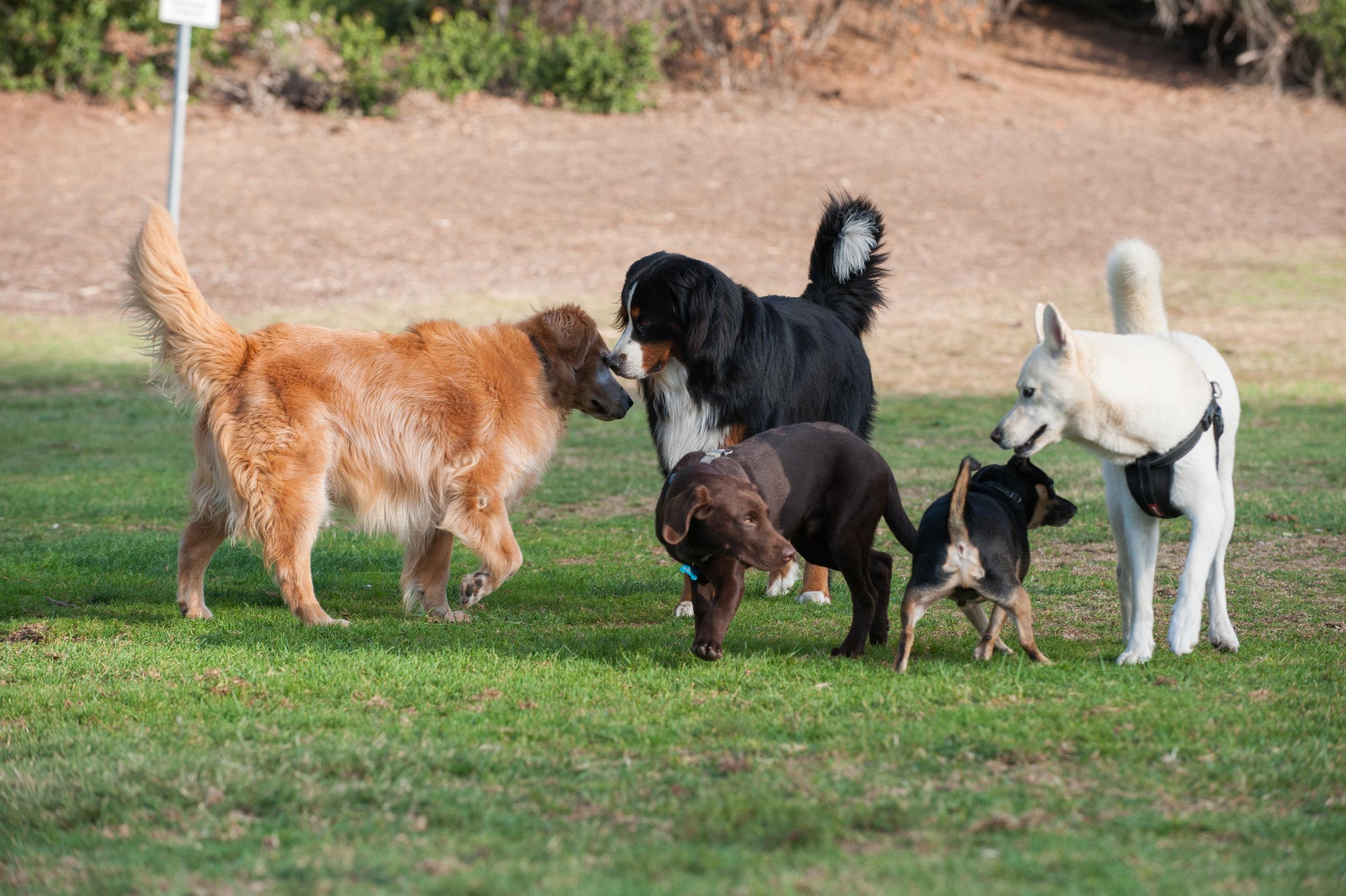 Dog Park photo.jpeg
