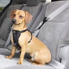 seatbelt.jpeg