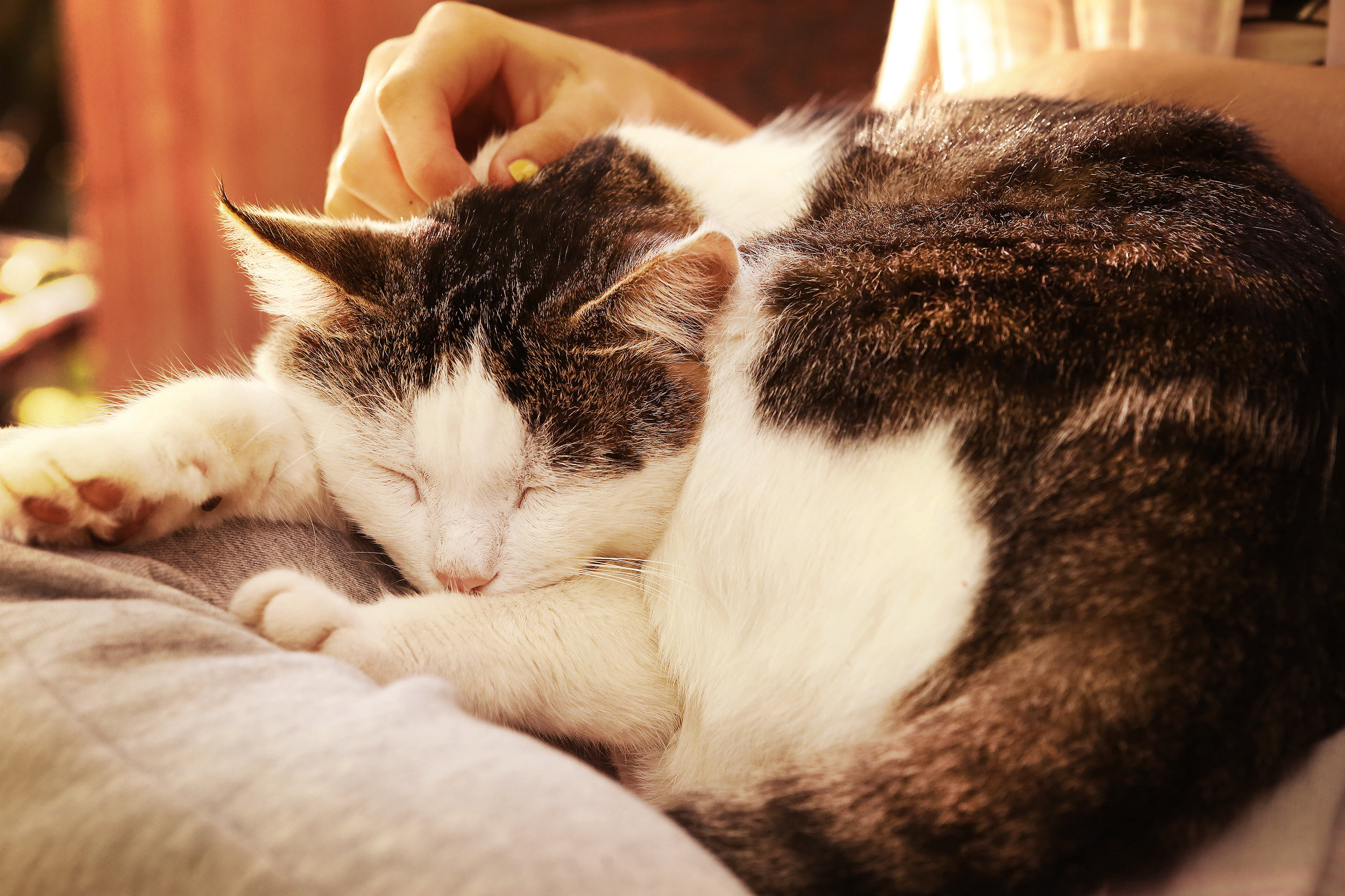 Senior Cat.jpeg