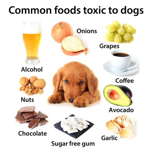 foods to avoid.jpeg