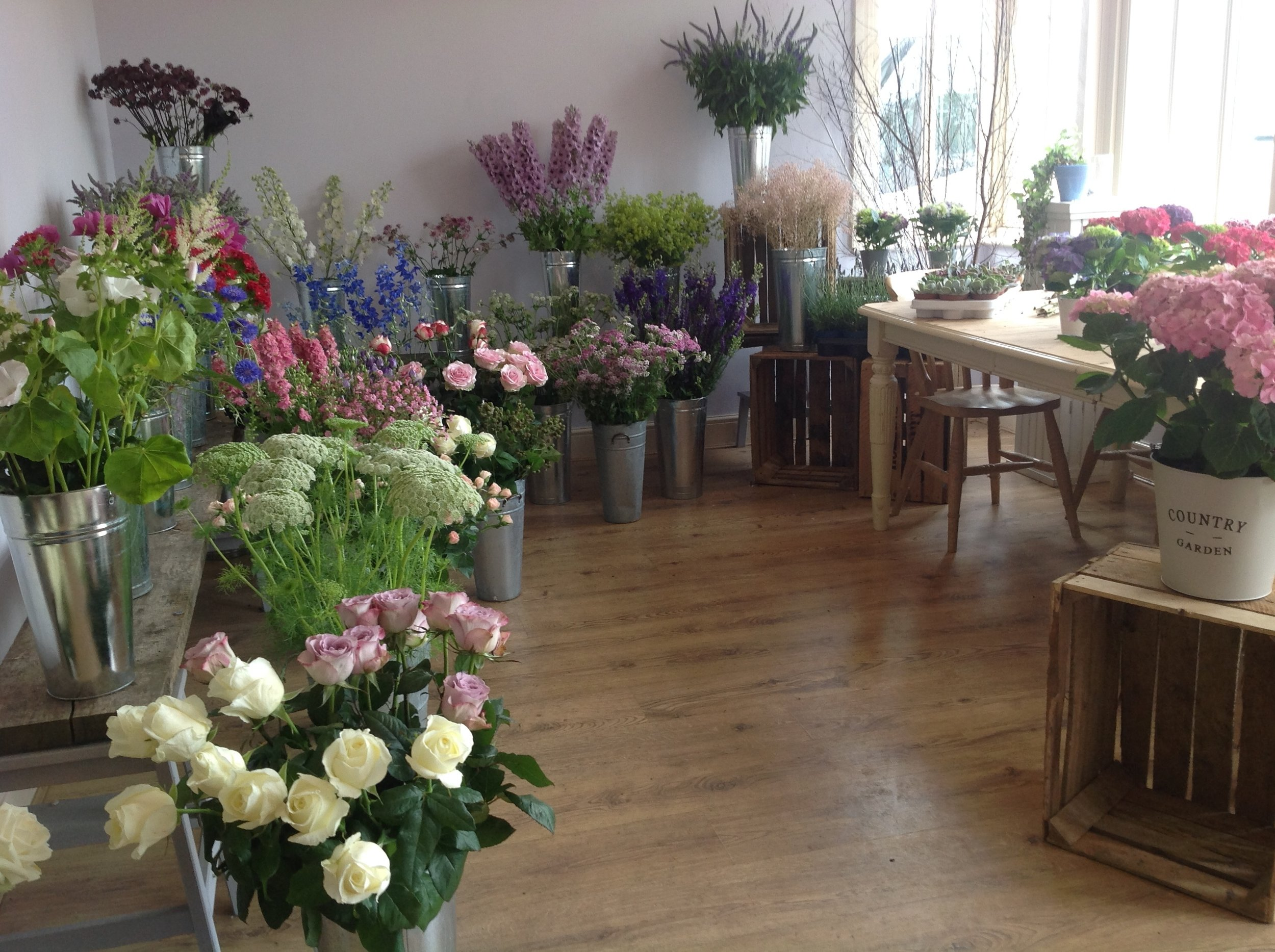 lilac_thyme-potted_flowers_shop.jpeg