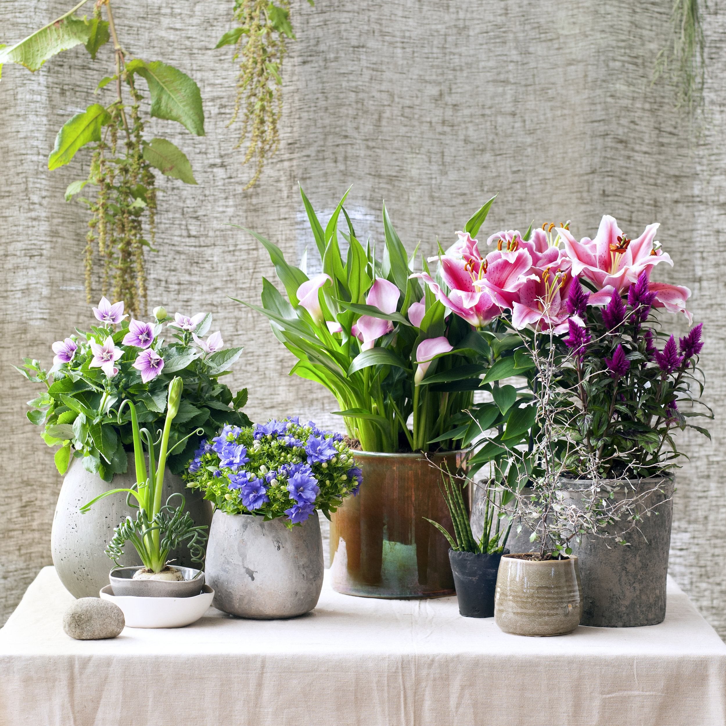 lilac_thyme-in_out_flowers_pots.jpg