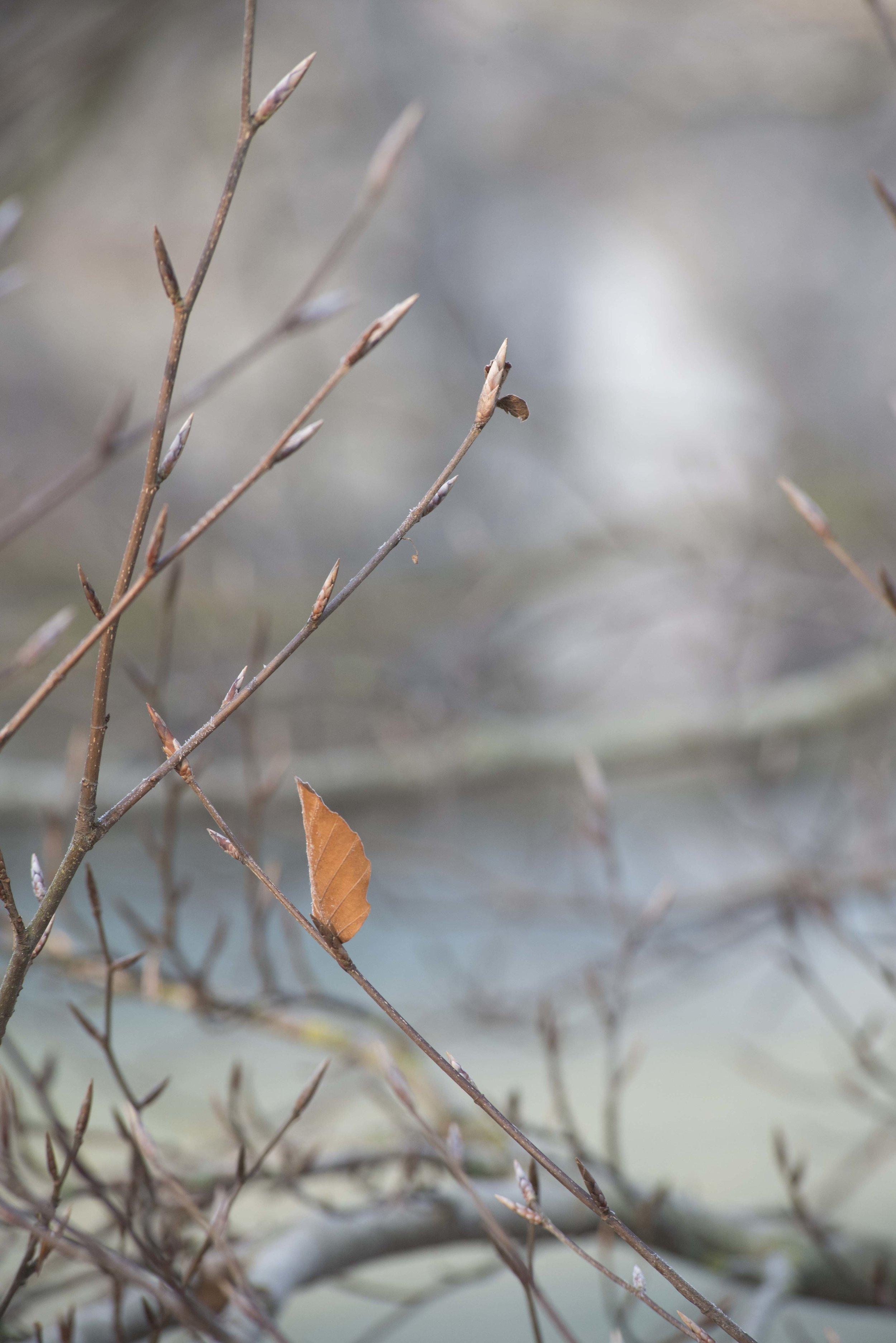 Red brown leaf in winter landscape