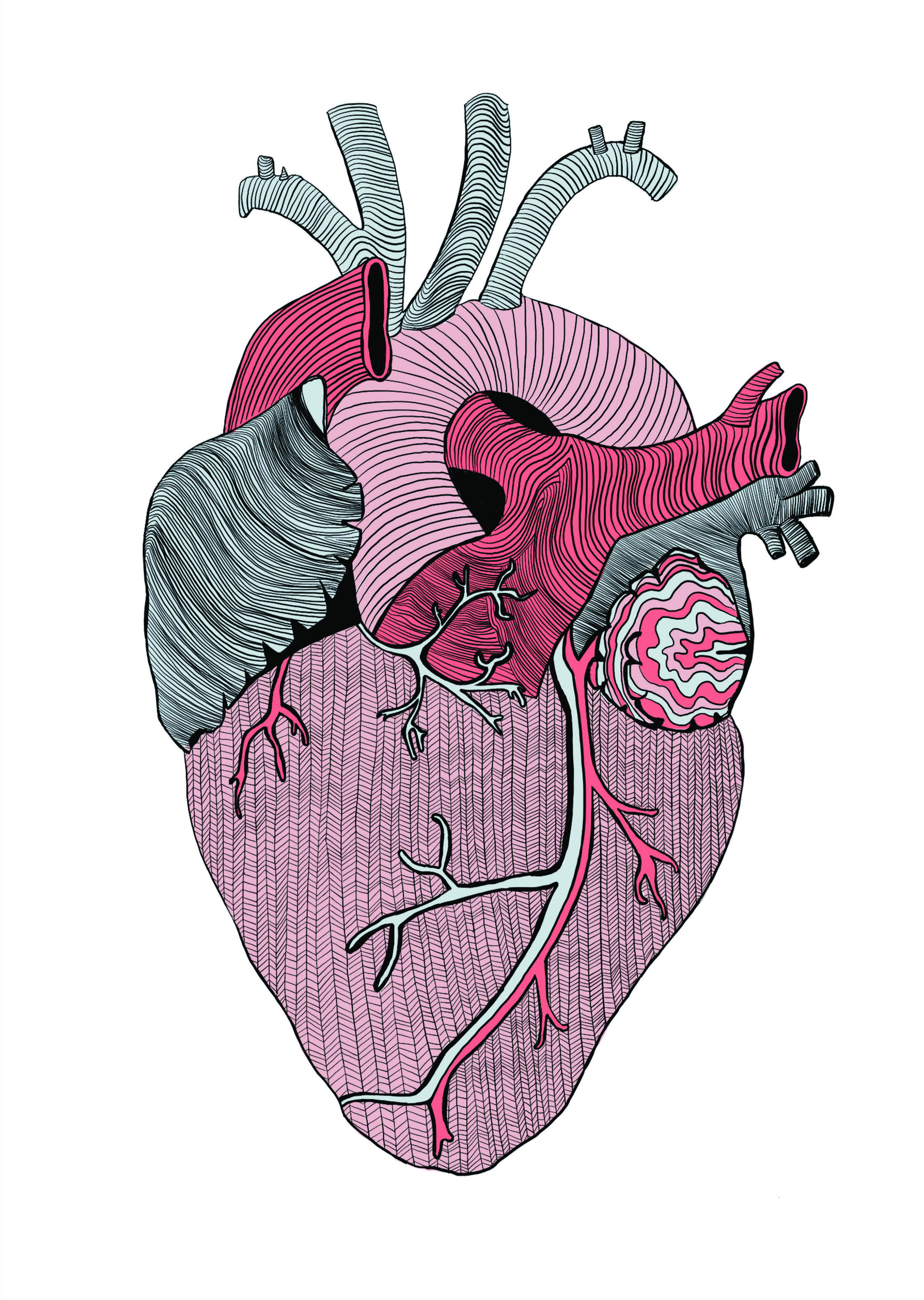 Heart illustration