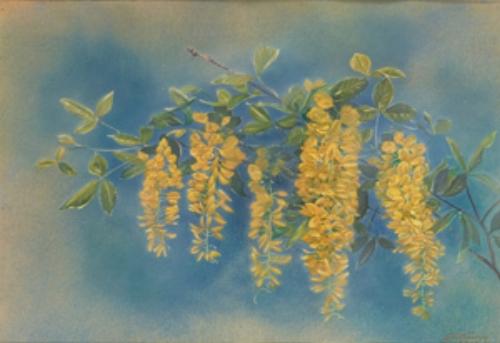 Goldregen, 1986. Öl auf Papier. 15,5 x 23