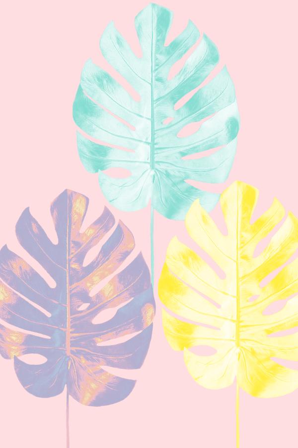 My 'mood board' that inspired the color palette for the summer.17 brand #graphicdesign #design #summerwallpaper #summer #botanicaldesign