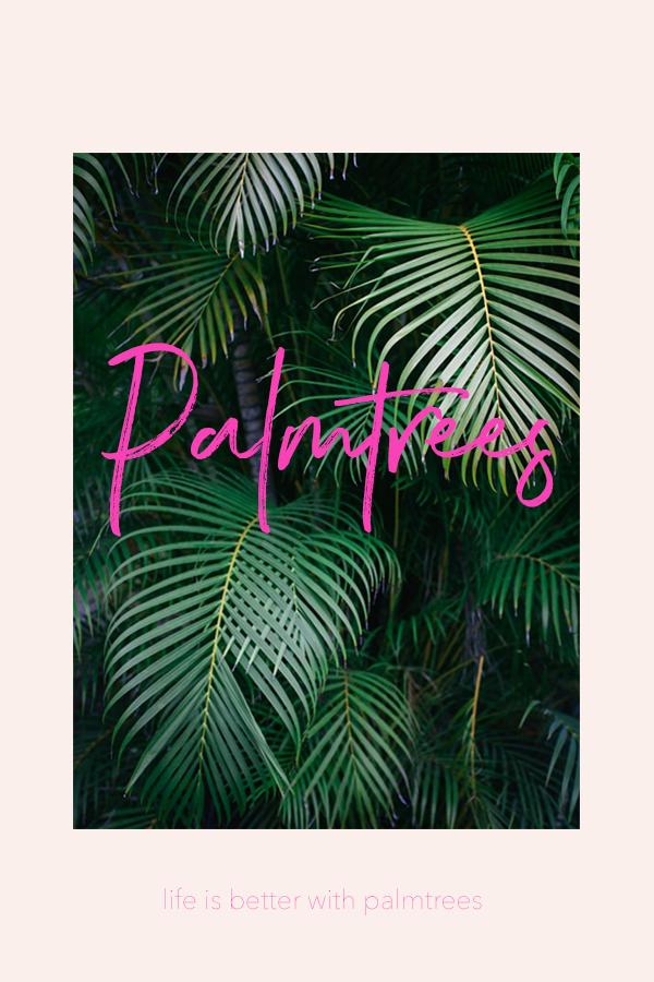 For the love of palm trees and Hawaii! #graphicdesign #design #palmtrees #tropical #dreamingofhawaii #hawaii #oahu