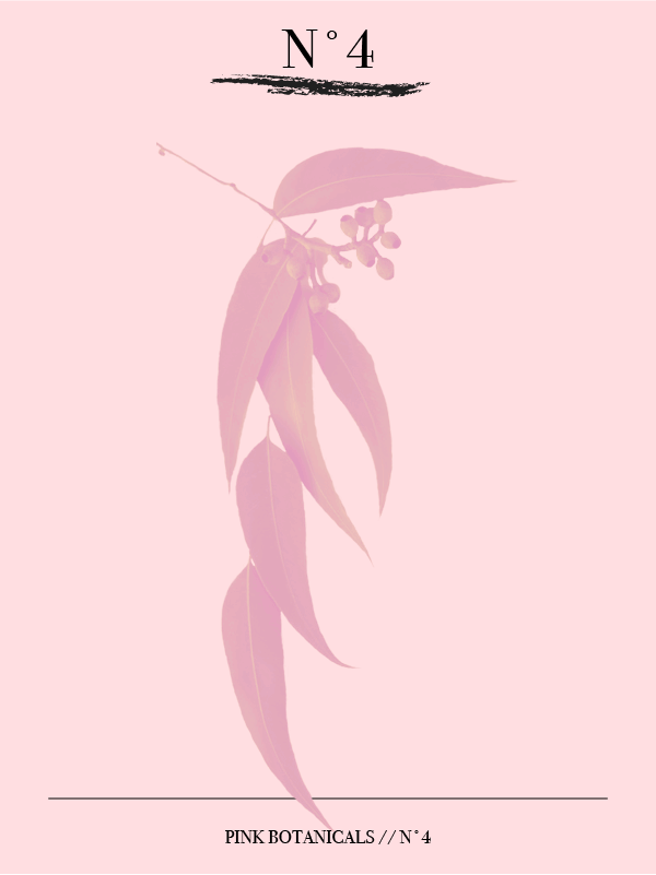 Pink Botanicals // No. 4 by Phylleli #design #graphicdesign #pink #thebotanicalseries #designer #freelancedesigner #editorialdesign