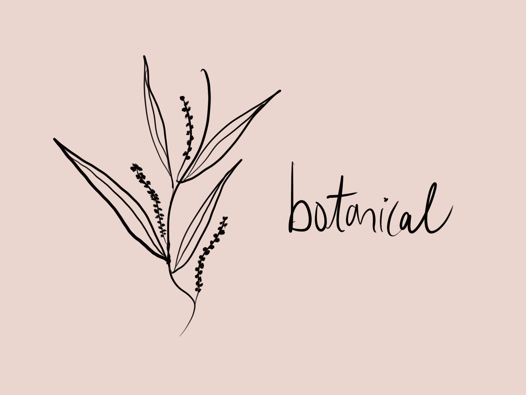 botanical illustration // phylleli design studio and blog