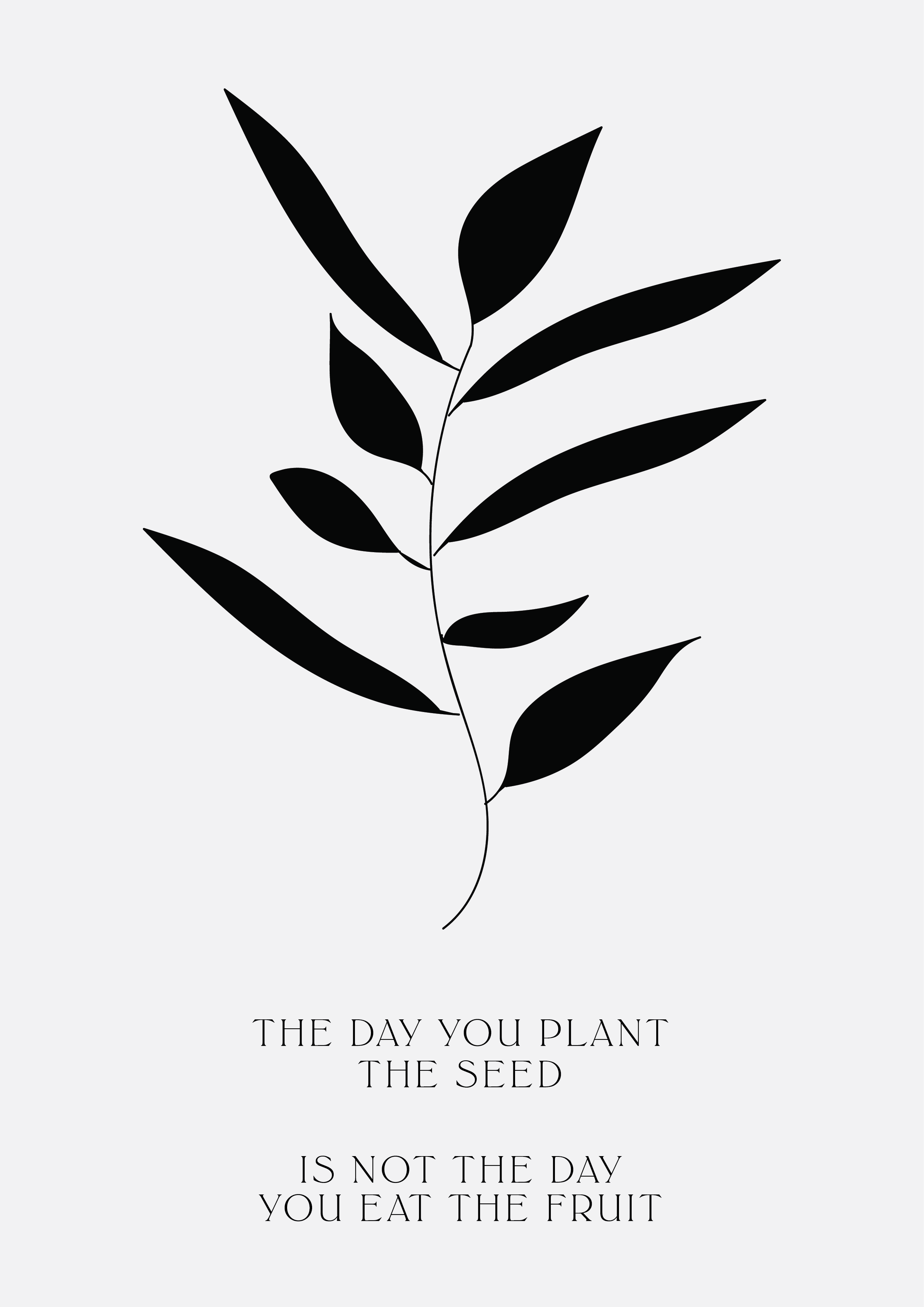 the day you plant the seed is not the day you eat the fruit // phylleli design studio, online-shop and self-care blog #illustration #typography #patienceisavirtue #designblog #selfdevelopment #goalsetting #selfcareblog #typography #botanicals #botanicaldesign #minimal #minimalism