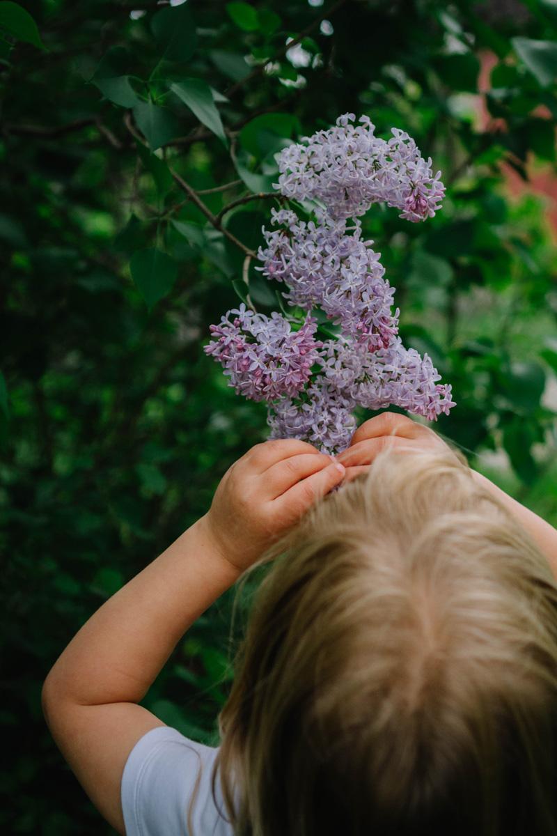 lilacs at weir farm laura barr photography
