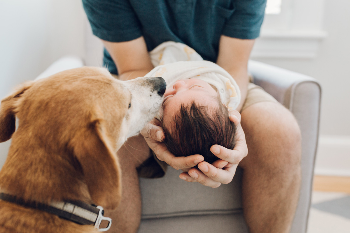 dog sniffing baby by laura barr photography