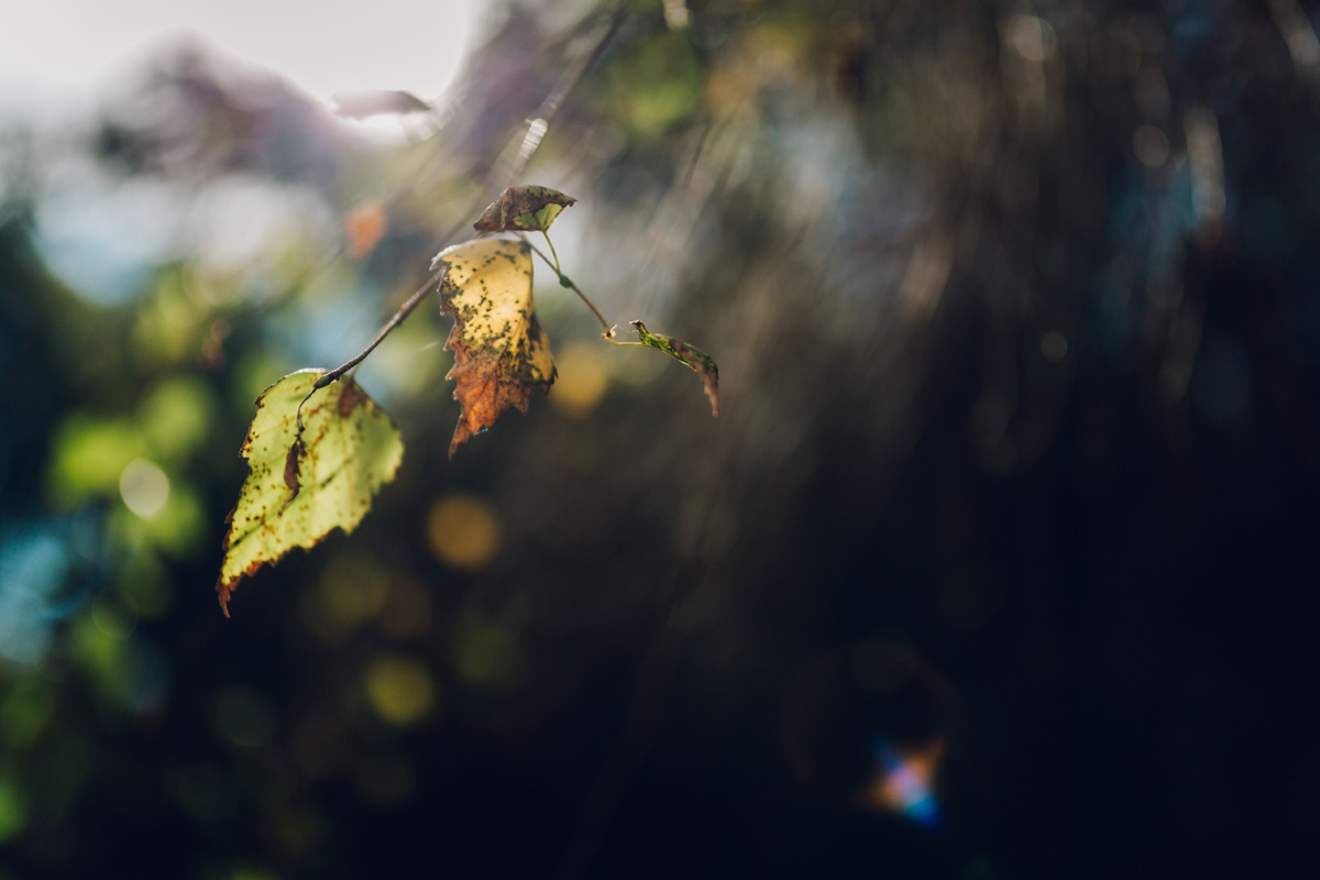 autumn is coming by laura barr photography