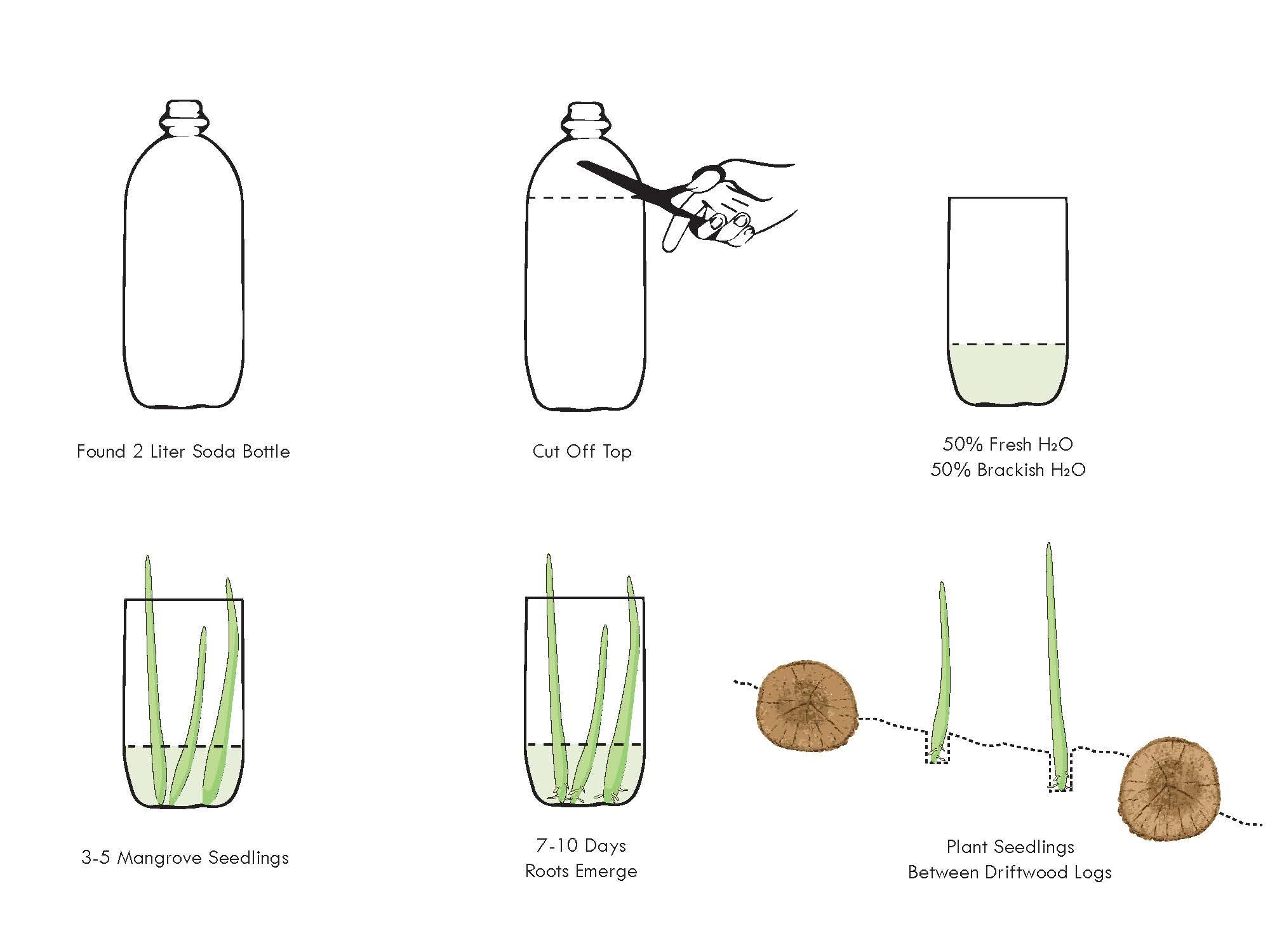 mangrove seedlings2.jpg