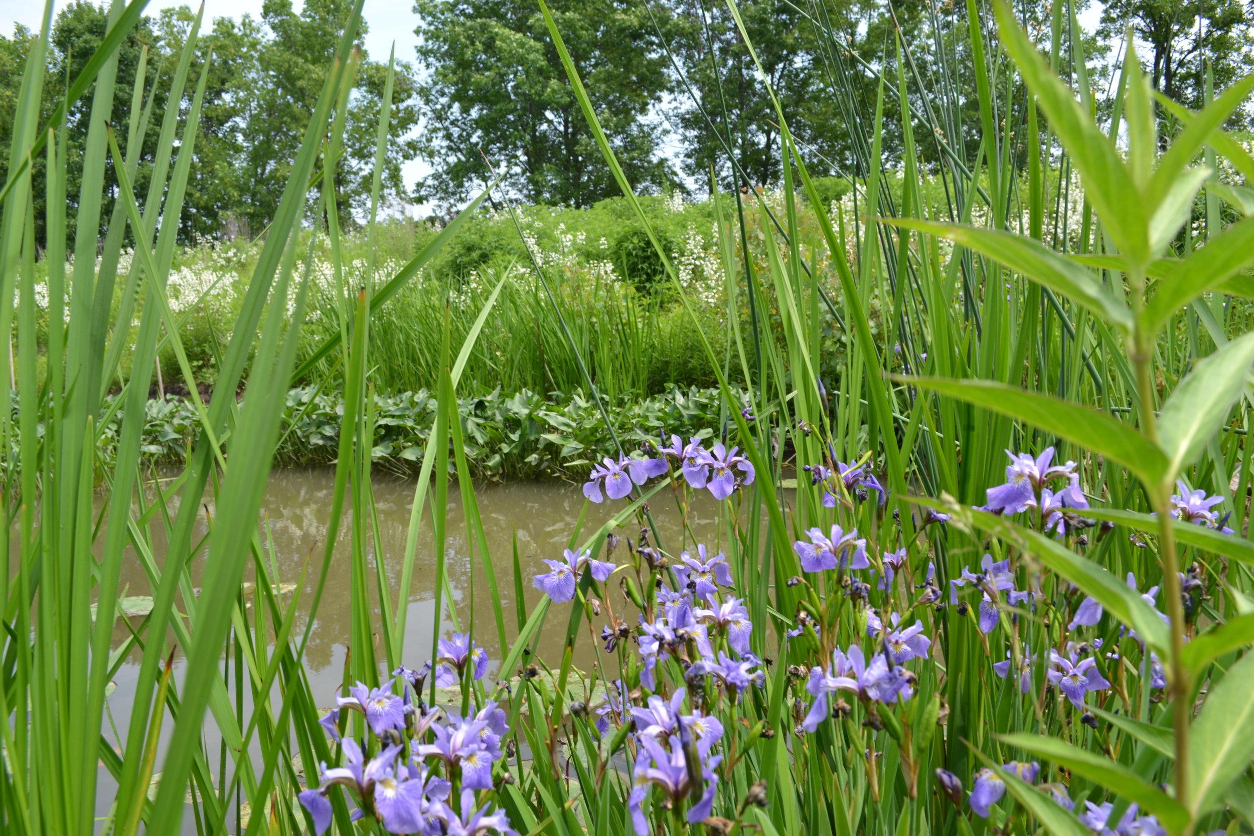 Wetland Edge Vegetation