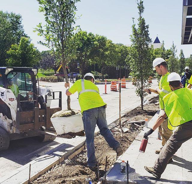 Planting action shot. . . . #trees #streettrees #urbanflora #plants #planting #oak #quercus #landscape #landscapearchitecture #landschaft #newconstruction #construction #wayzata #lakeminnetonka  @nelcolandscaping @reuterwalton