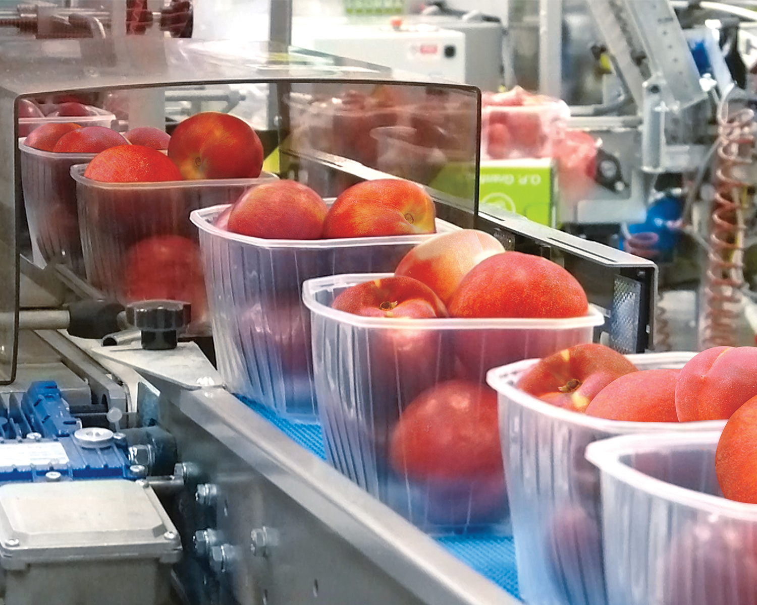 Produce being packaged by a Sorma weighing and packaging machine.