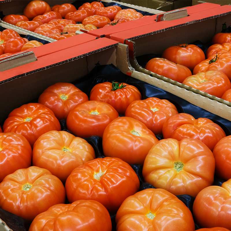 Large tomatoes packed in GrowPack Insert Trays Ready for Safe Shipment