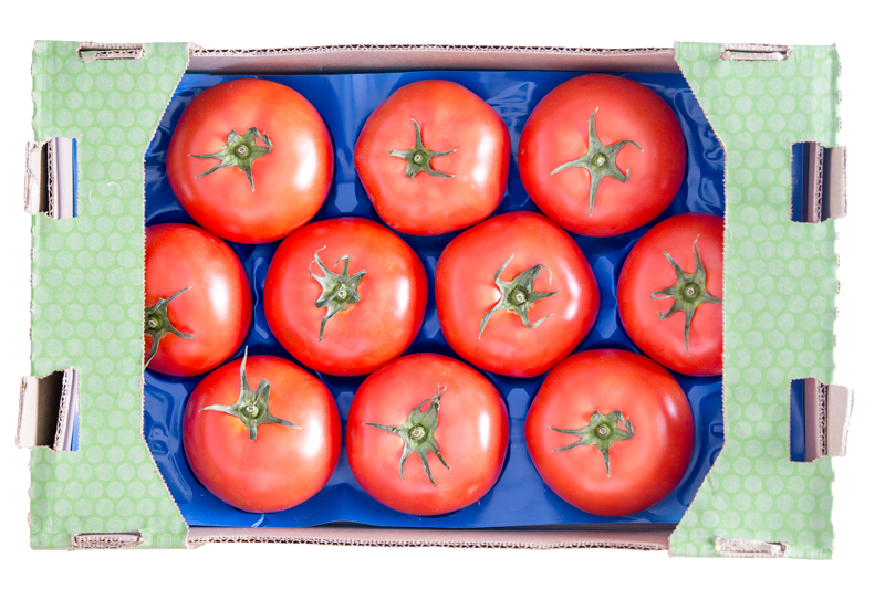 Large tomatoes on blue growpack tray in cardboard shipping flat