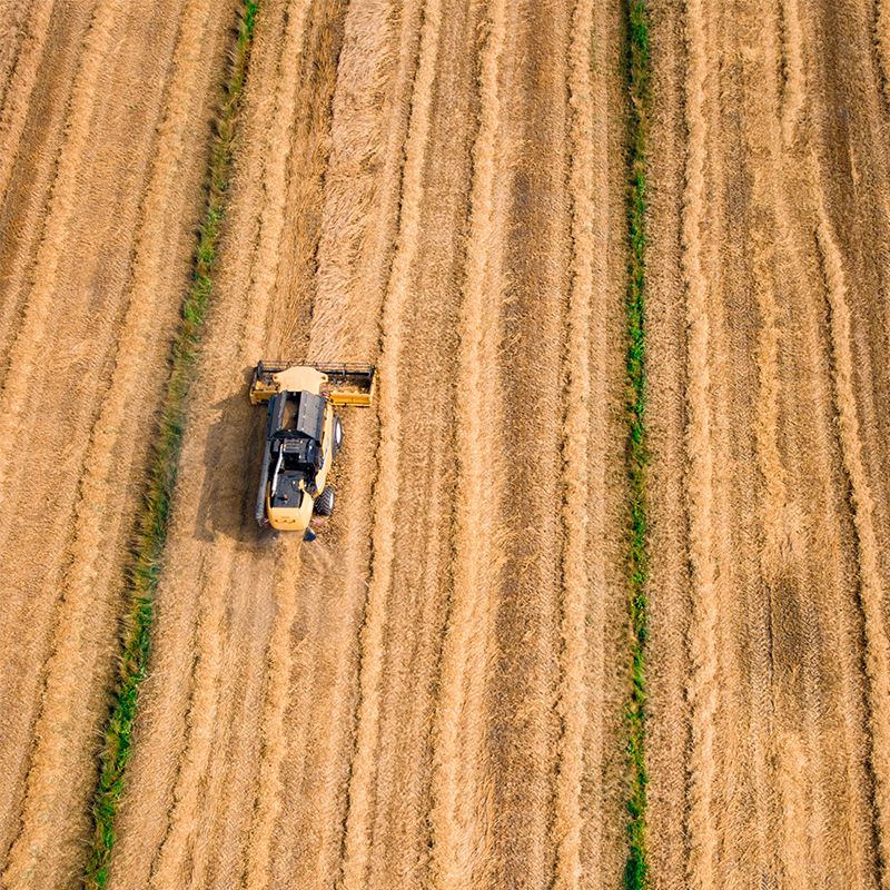 yellow  tractor farming wheat field in the summer time