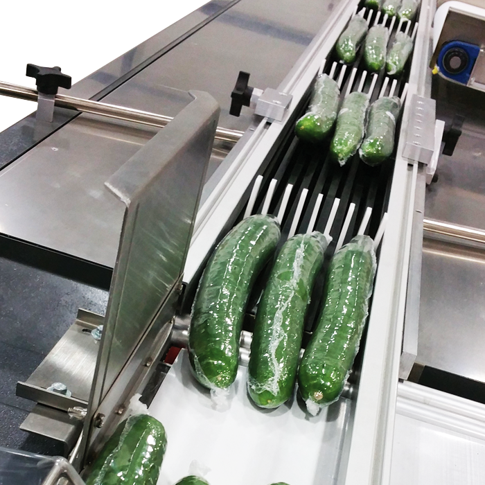 photo of shrink wrapped green english cucumbers on packflight conveyor