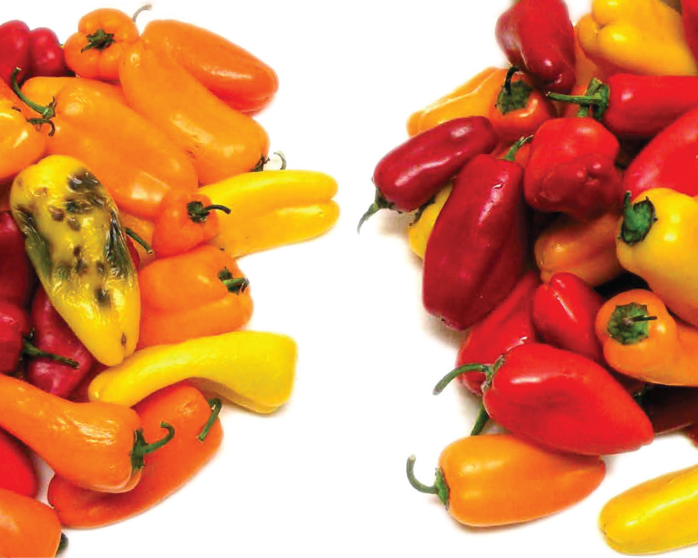 red yellow and orange peppers comparing map technology to regular packaging