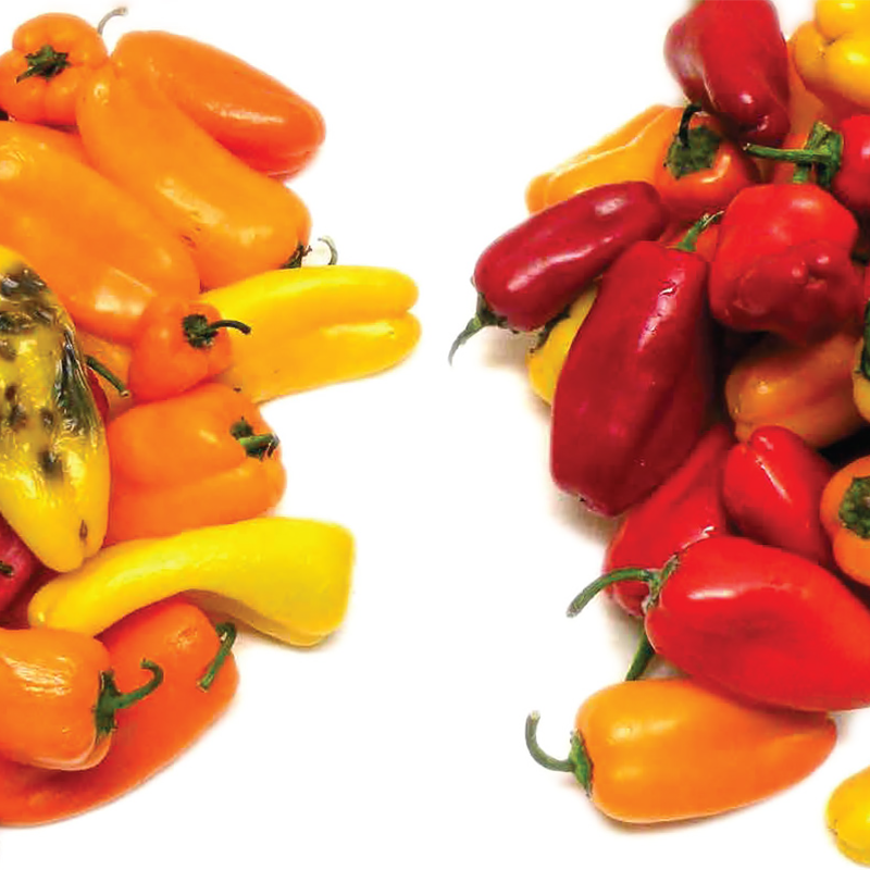 comparison between peppers packged with regular packaging compared to peppers packed with MAP