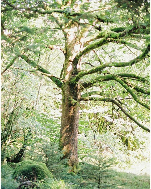 Norway was so green and lush. I am obsessed with taking photos of cool trees! ⠀ ⠀ ⠀ #ishootfilm #filmisnotdead #35to220 #fineartcuration #weddinginspo #pursuepretty #flashesofdelight #thatsdarling #fineartweddingphotographer #yycweddingphotographer #yyc #yvr #fuji400h #mediumformat #weddingphotography